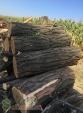 Продам  дрова твердых пород (дуб, ясень, акация), фруктовые дрова
